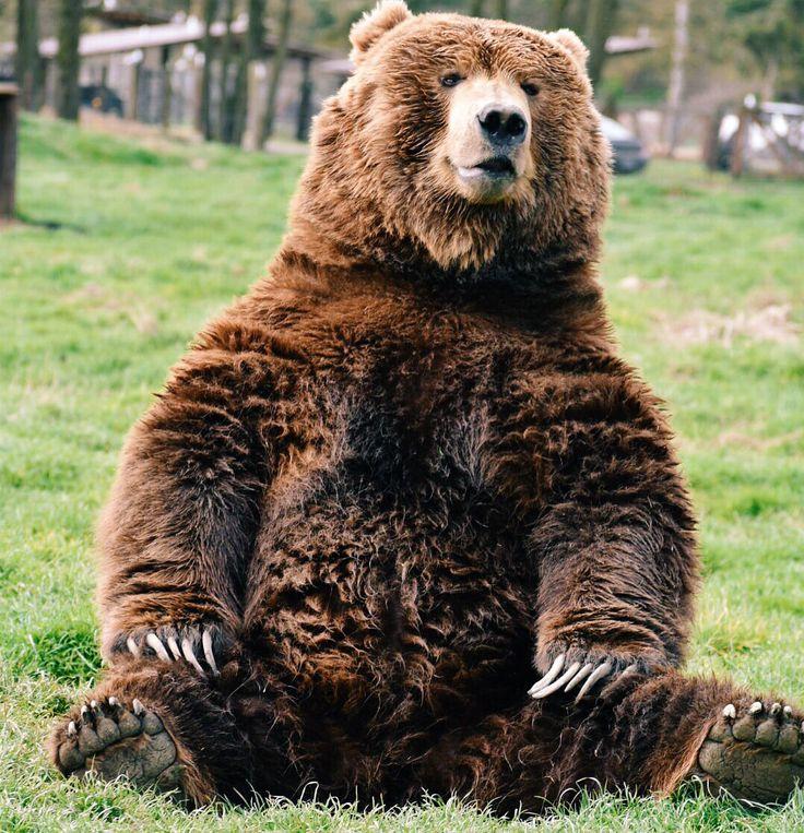 наши самые большие известные медведи фото дело, что