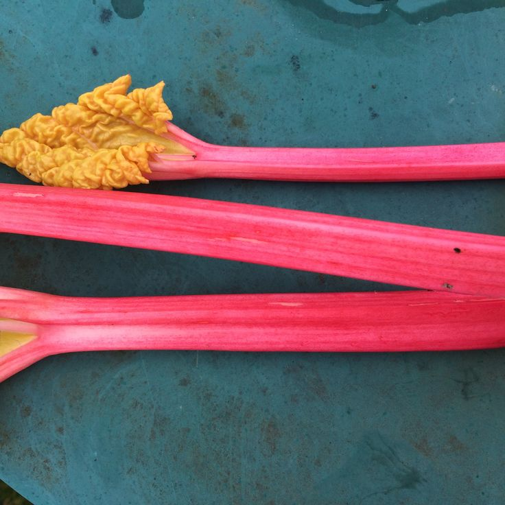Autumn is the perfect time of year to plant rhubarb, just add compost and water, to get these tender bright pink stems use a rhubarb forcer, simply place over the crowns in winter, come next spring you too will be picking these