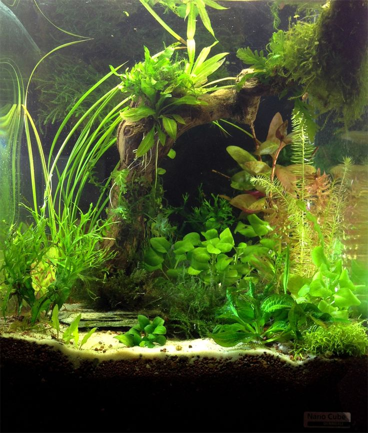 Freshwater Aquascape: Pinterest • The World's Catalog Of Ideas