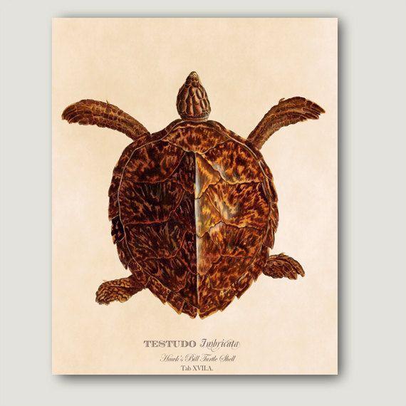 Vintage Turtle Art Print concha de tortuga por SecretHarborDesigns