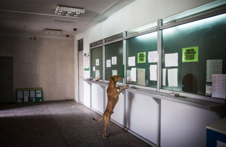 A dog runs around a bank while civilians receive a one-time cash donation from Russian-backed rebels on February 25, 2015, in Debaltseve, Ukraine.