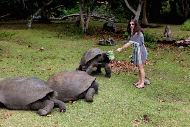 Seychellen Diary: Traumurlaub auf Praslin - Journelles