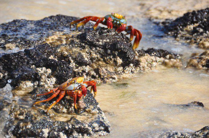 Ecuador, Galapagos, Peru & Bolivia. Adventuredk. Travling. Travel. Nature. Culture. Beach. Sand