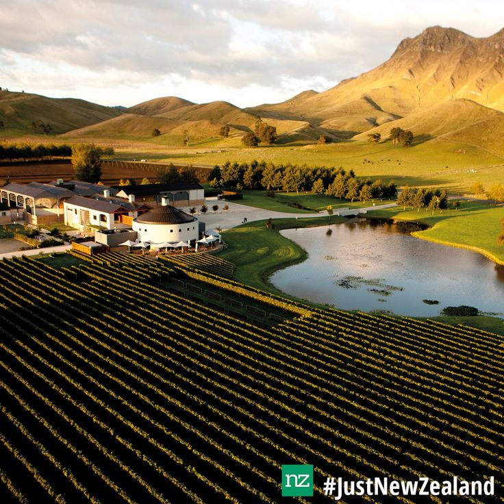Craggy Range is the perfect place to visit when in Hawkes Bay! #nz #HawkesBay #wine #vineyards #relaxing