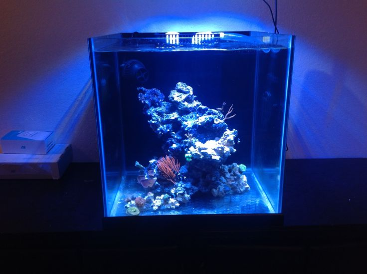 Start of a 35 gallon 20x20x20 cube reef tank david 39 s for Cube saltwater fish tank