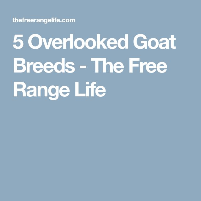 5 Overlooked Goat Breeds - The Free Range Life