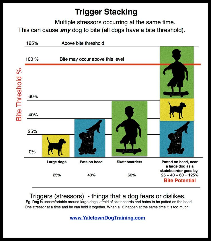 """Dogs do not bite """"out of the blue"""". - Yaletown Dog Training   In-Home Training and Board & Train"""