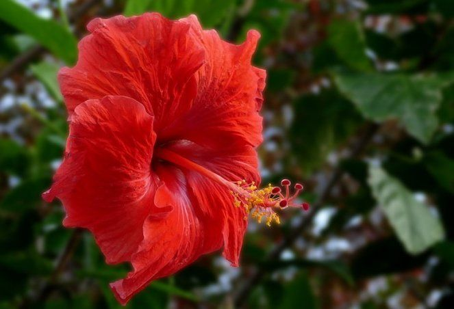 12 Facts About Flowers Information In Marathi Information That Will Blow Your Mind Flowers Information In Marathi Inf Hibiscus Dried Hibiscus Flowers Flowers
