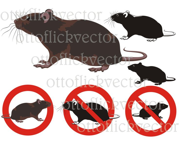 RAT VECTOR CLIPART, rats, rodent silhouettes and warning signs eps, ai, cdr, png, jpg, pest control, animal art by ottoflickvector on Etsy