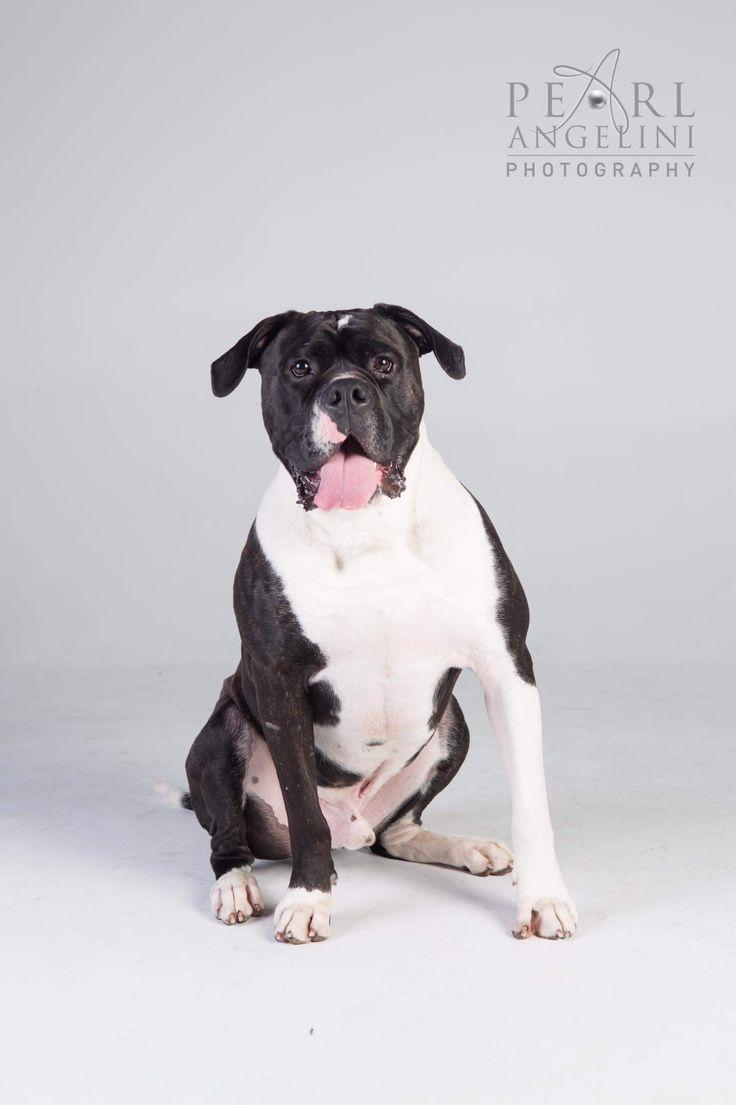 736 besten Dog Bilder auf Pinterest   Schöne hunde, Hunderassen und Auge
