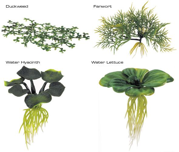 Floating plants that provide oxygen into the water. In addition, there are important hiding place for fish under the water surface.