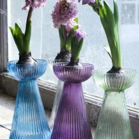 14 best Forced Bulbs & Gles images on Pinterest | Garden bulbs ... Ziploc Gl Vase on