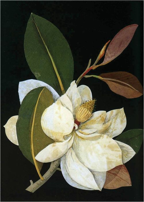 """Mary Delany collage of a Magnolia grandiflora    Mary Delany (nee Granville) (14 May 1700 – 15 April 1788) was an English Bluestocking, artist, and letter-writer; equally famous for her """"paper-mosaicks"""" and her lively correspondence.    Mary Delany was seventy-two years old when she noticed a petal drop from a geranium. In a flash of inspiration, she picked up her scissors and cut out a paper replica of the petal, inventing the art of collage. It was the summer of 1772, in England. During…"""