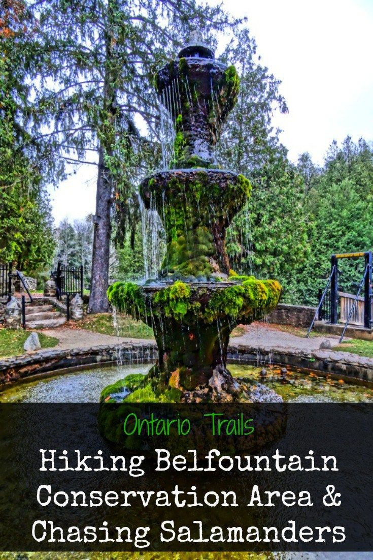 Ontario Trails: Hiking Belfountain Conservation Area & Chasing Salamanders