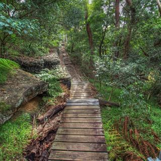 Lane Cove National Park, Lane Cove | 18 Magical Places You Won't Believe Are Actually In Sydney