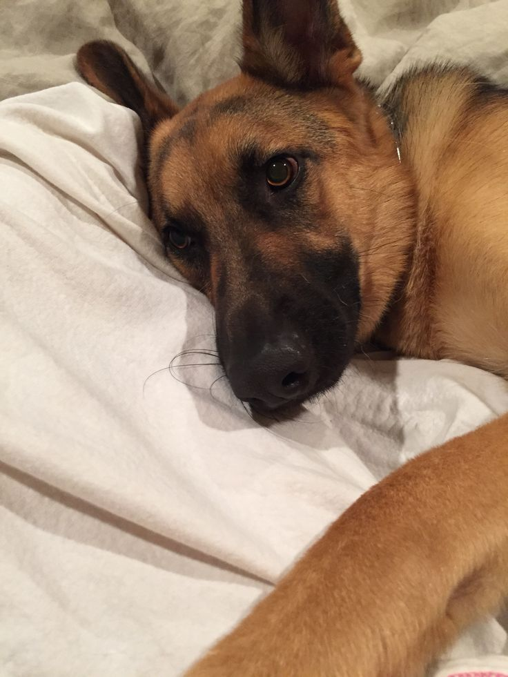 Dog Sleep In Bed With Owner