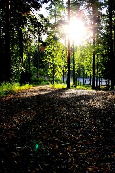 Finnish woods.