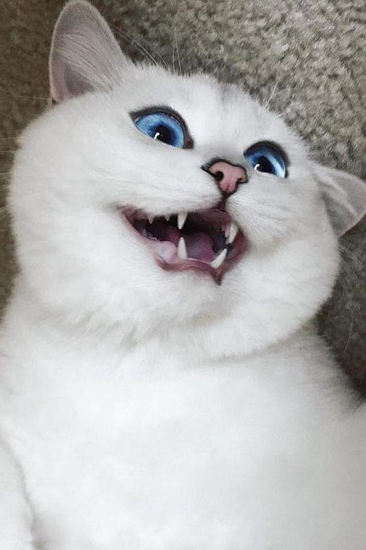 eine schöne Katze wie ein Gemälde