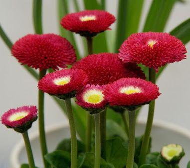 Fiori ,flowers,flores,fleurs - Community - Google+