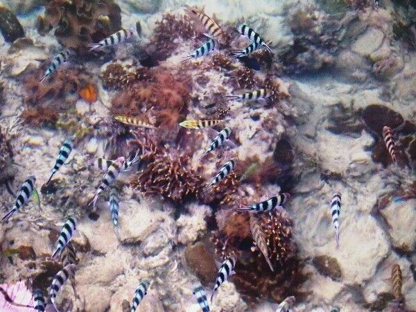 """See the clear water"" - Ora Beach, Maluku - Indonesia"