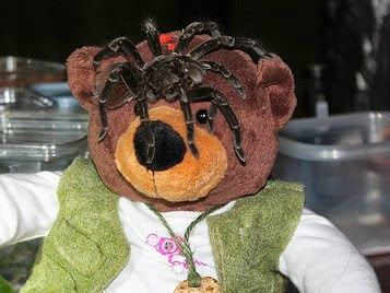 Tiny Bear Explores Big Questions in the Amazon! Got up close and personal with rainforest wildlife