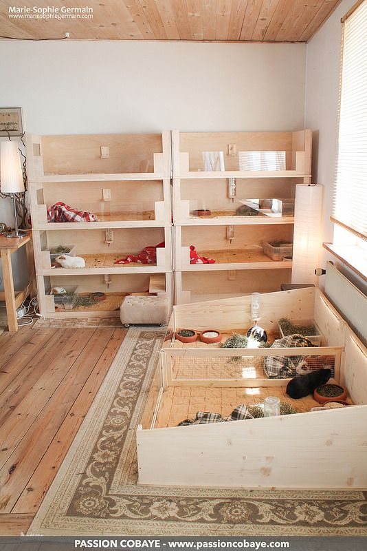 My guinea pigs' habitat (shelf with 8 modules + big playpen) - by Marie-Sophie Germain, www.passioncobaye.com