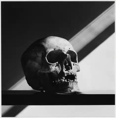 robert mapplethorpe                                                                                                                                                                                 Plus