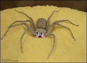 Avergonzado-araña-entierra-misma