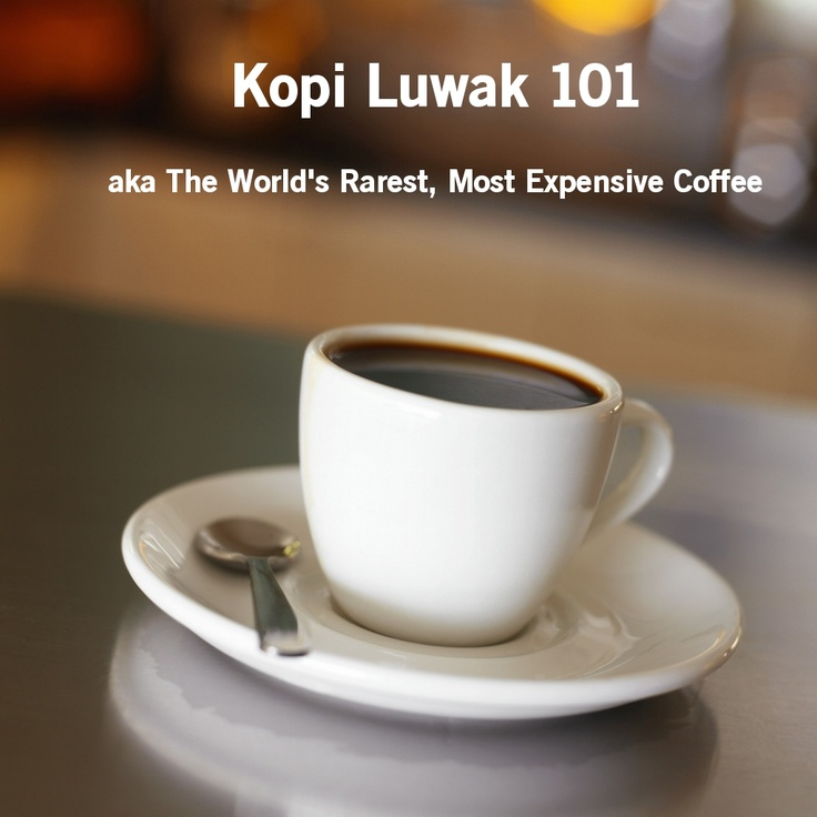 Kopi Luwak Coffee: The rarest, most expensive coffee in the world