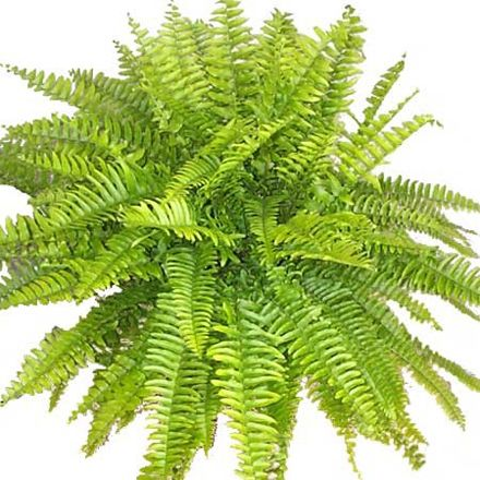 Pin by adrianna hofman on plantes pinterest - Plantes interieur depolluante ...