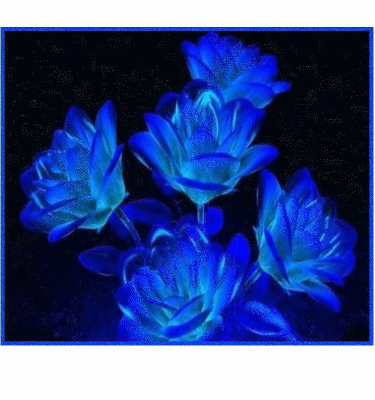 17 meilleures id es propos de bouquet de rose bleue sur - La couleur bleue ou bleu ...