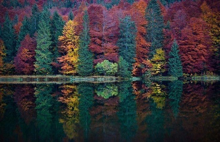 Осенний лес на одном из озер Аляски, США