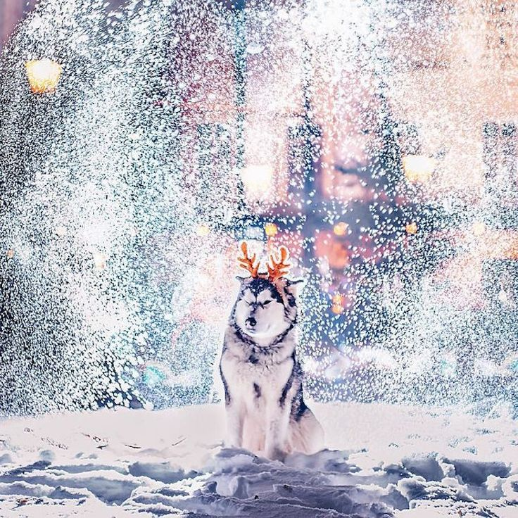 kristina keeva light snow moscow