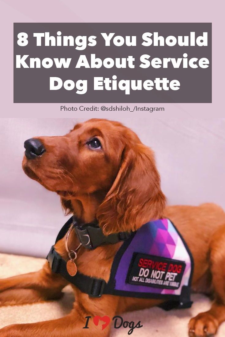 8 Things You Should Know About Service Dog Etiquette Service