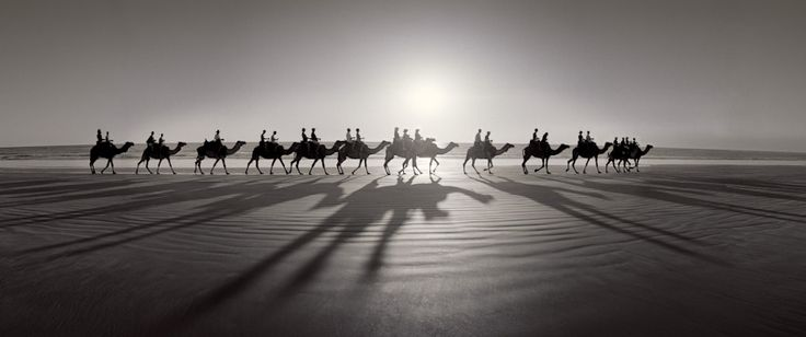 Camels - Cable Beach