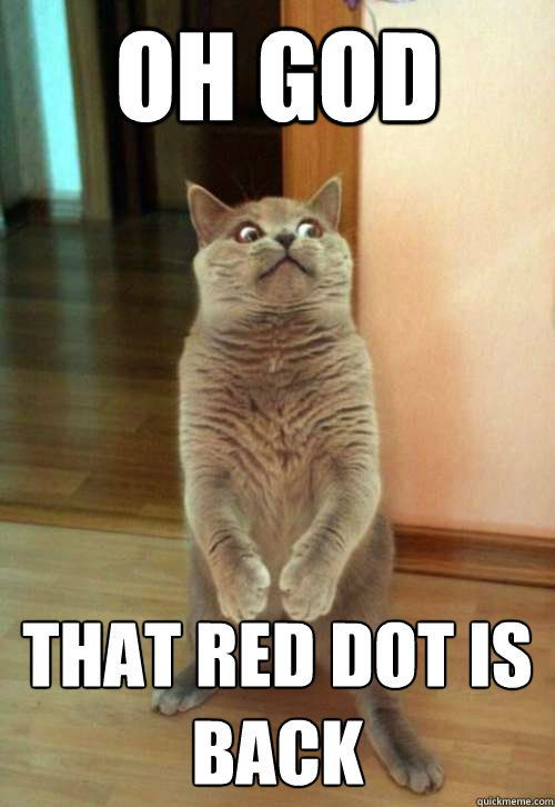 The red dot.The Doors, Cat Face, The Face, Funny Cat, Funny Stuff, So Funny, Kitty, Silly Cat, Animal
