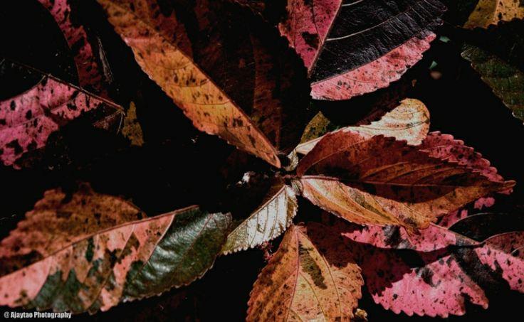 Tropical leaves - 2 - Ajaytao