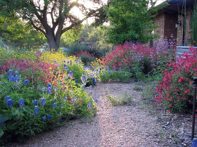 Plano Prairie Garden Prairie Garden Small Backyard