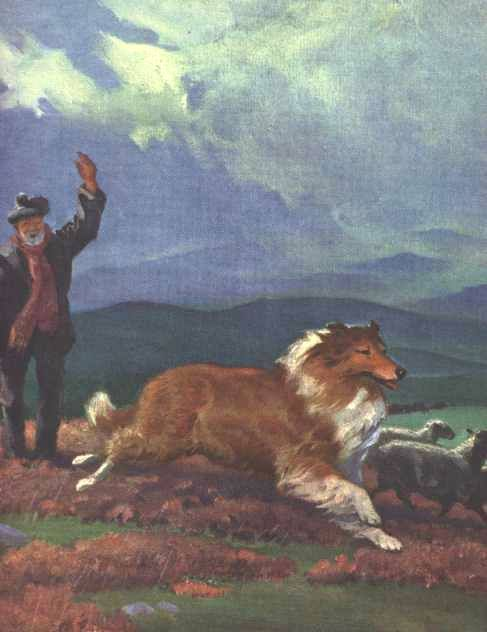1970 Rough Collie by Wesley Dennis