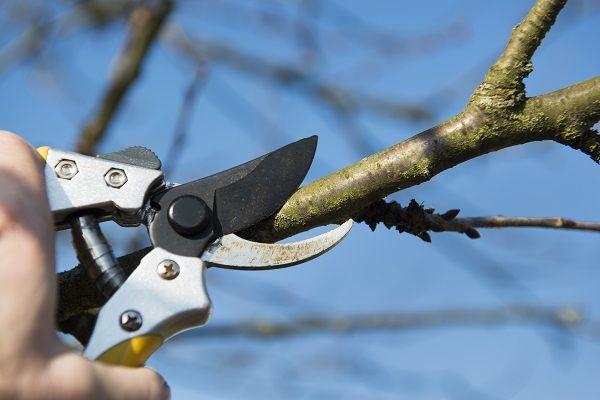 剪定(せんてい)とは樹木の枝を切ることで形を整えたり、風通しを良くしたりすることの総称。庭木のお手入れの中のひとつです。剪定方法から、剪定するべき枝のことなどご紹介。