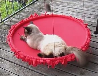 No sew Cat Swing ♔ Hula Hoop Knoten Schaukel für Katzen – Videotutorial – u.