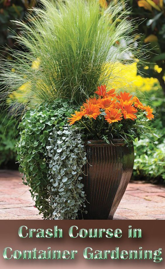 A Crash Course In Container Gardening #flowersplantsinpots