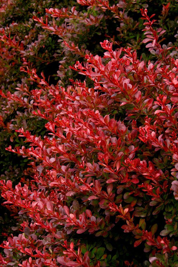 9830 best winter plants images on pinterest winter plants