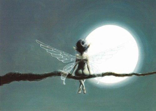 Petite fée au clair de lune  Dessin de Pascal Moguérou