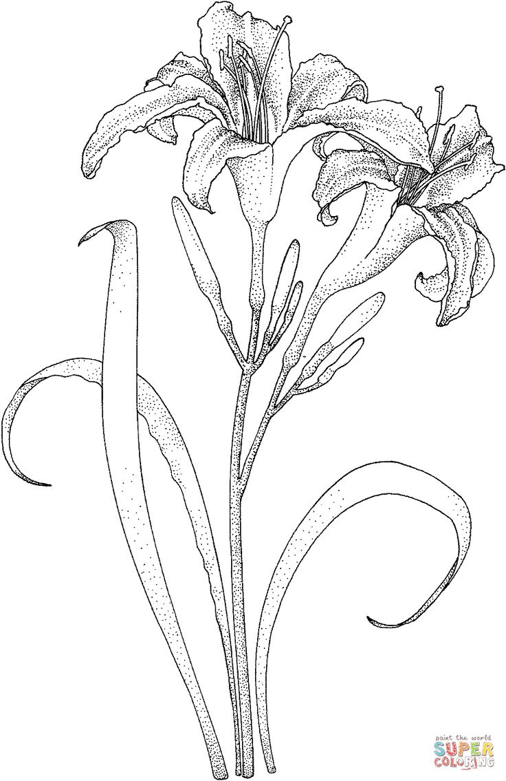 Get 20+ Coloring pages of flowers ideas on Pinterest