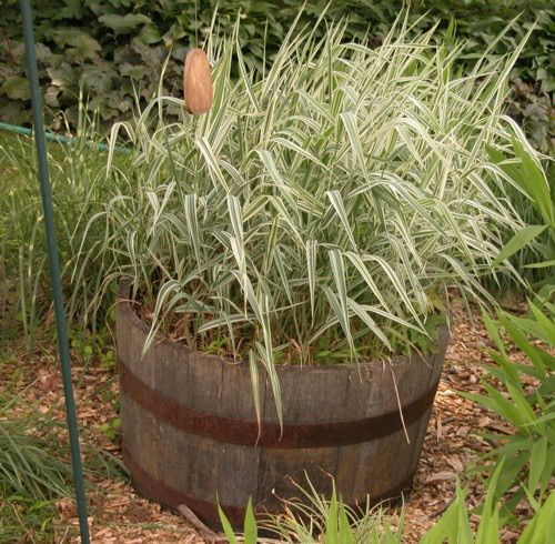 Ornamental Grasses - How to Choose an Ornamental Grass