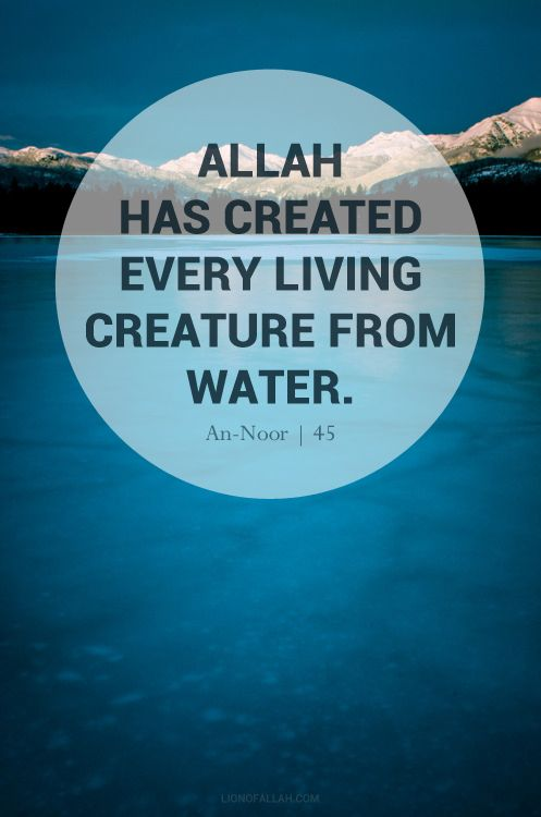 """The words """"Water is the main component of organic matter. 50-90% of the weight of living things consists of water"""" appear regularly inencyclopedias Furthermore, 80% of the cytoplasm (basic cell material) of a standard animal cell is described as water in biology textbooks.   But it was in the Qur'an for 1400 years."""