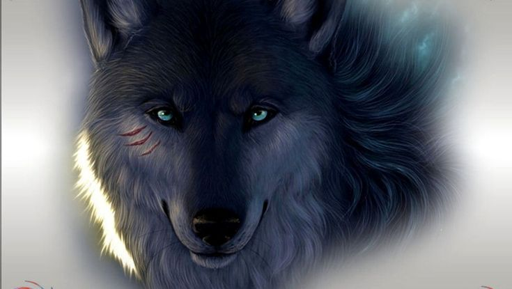 new wolf pics | ... wolf, which is at times observed in your jungles from the New England