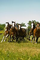 Индийские лошади в битве при Литтл-Бигхорн реконструкции на Ворона индейской резервации в Монтане   Аллен Расселл фотографии