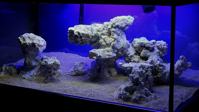 Minimalist Aquascaping - Page 76 - Reef Central Online Community
